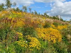 GOC Walthamstow to Stratford 214: Queen Elizabeth Olympic Park flowers