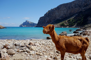 صورة Cala Bóquer الشاطئ بالحصى. wild sky mountains landscape coast spain scenic goat valley mallorca rx100 boquer
