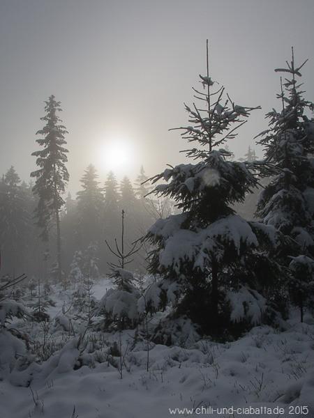 Sonne im Nebelwald