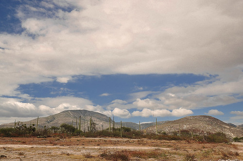 San Juan Raya - Turritelas (08)