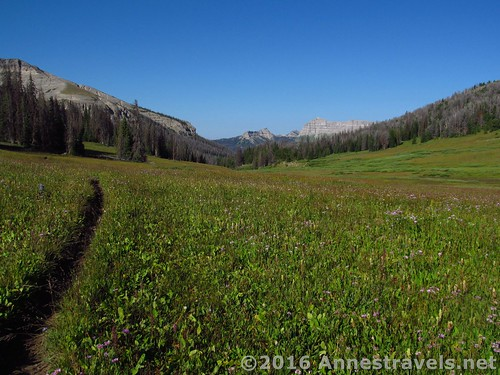 Views while hiking through Bonneville Pass, Shoshone National Forest, Wyoming