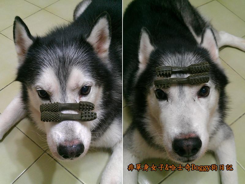 哈士奇Doggy愛狗零食18