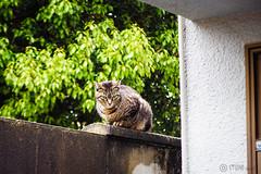 Today's Cat@2016-04-17