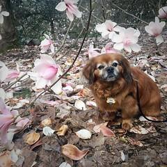 Magnolia Trail @hoytarboretum #pdx #pnwonderland :cherry_blossom: