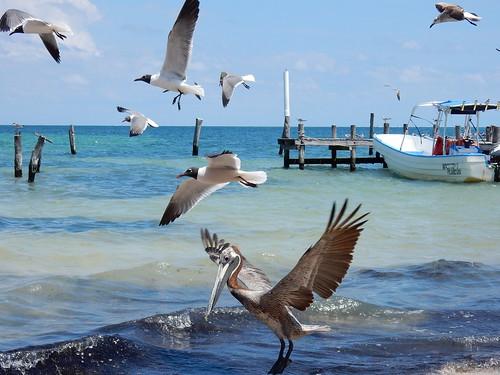 Cancun - birds
