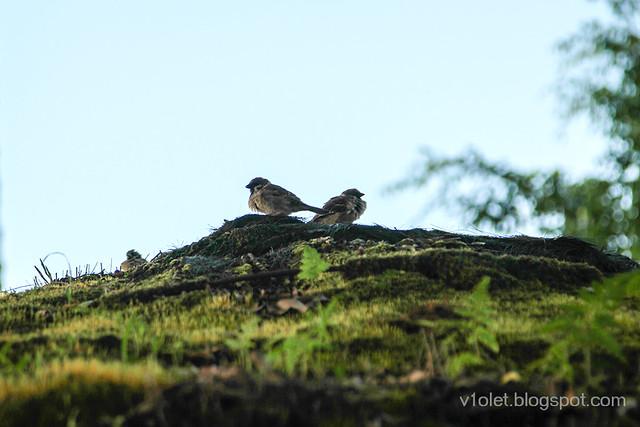 Carolina31 bird-1053crw
