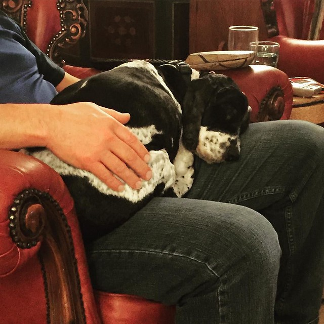 Yup. That's a 13 year old cocker spaniel snoring his little fat head off on his daddy's lap. Absolutely ruined.