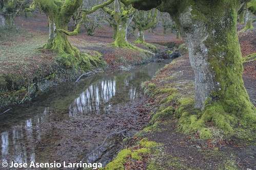 Parque Natural de Gorbeia  #DePaseoConLarri #Flickr -3041