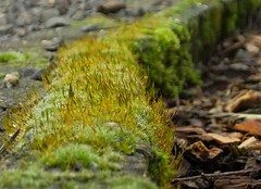 Mossy Divide