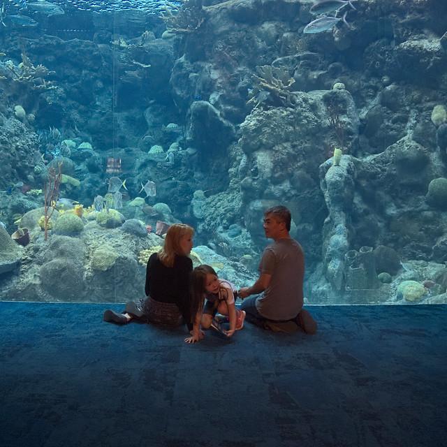 Family Florida Aquarium