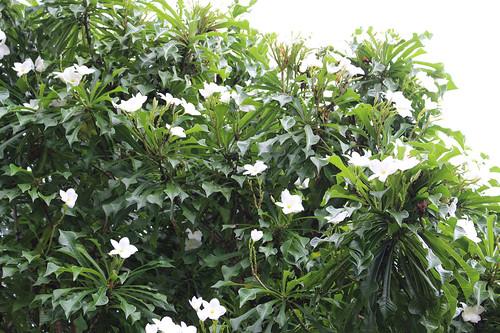 Fairchild Botanic Garden, Miami