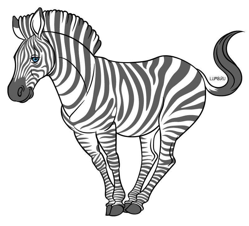 280216_zebra_01