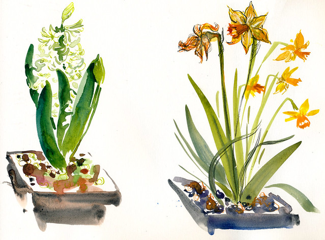 Sketchbook #94: Update on the Flowers
