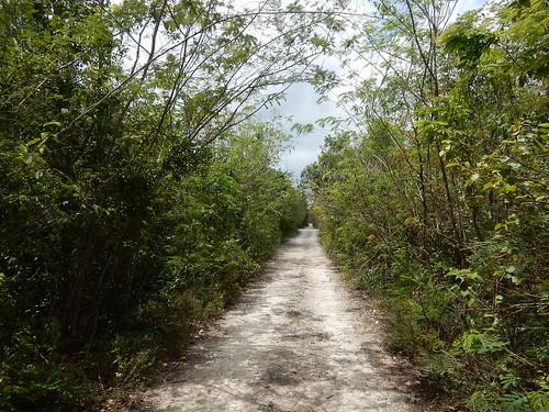 Lange dirtroad naar Quintana Roo NP