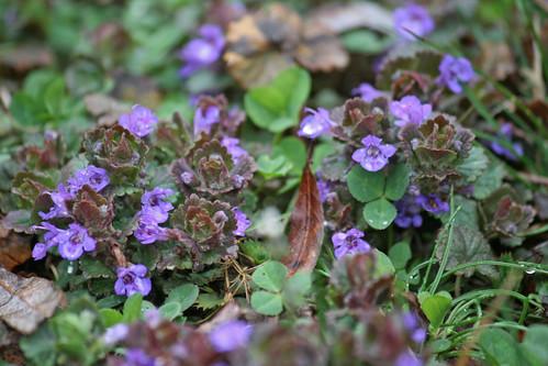 blue weeds IMG_5349