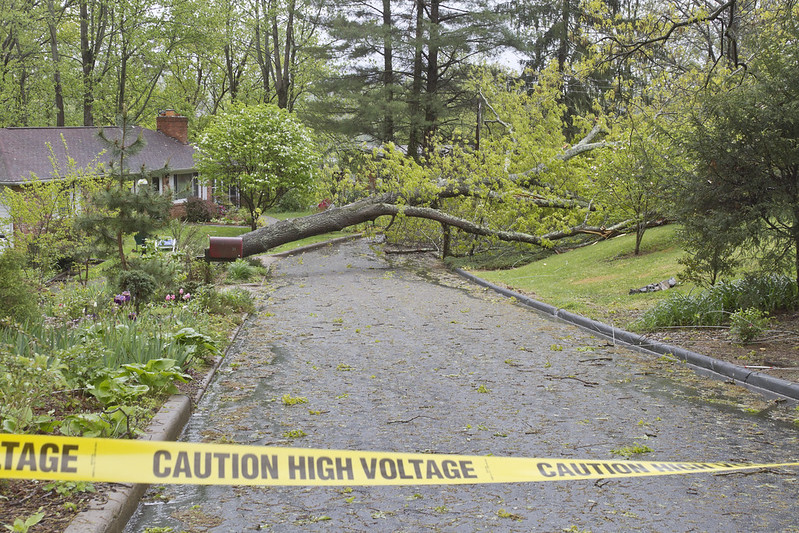 Caution Tape, Tree and Wires Down on Road