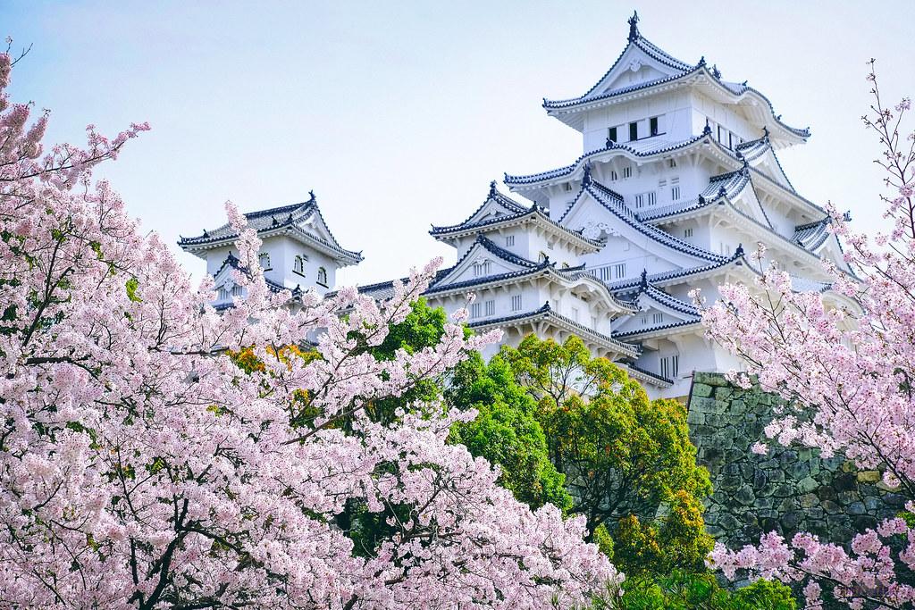 春の桜 - 姬路城