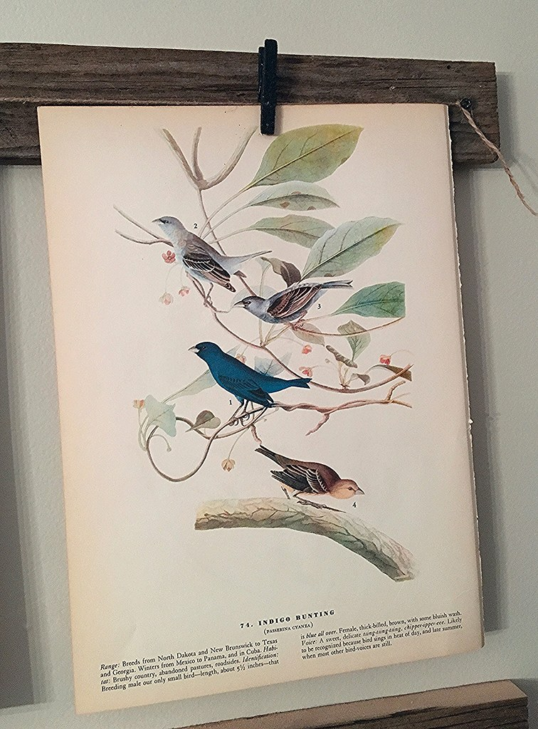 Vintage Indigo Bunting Bird Print