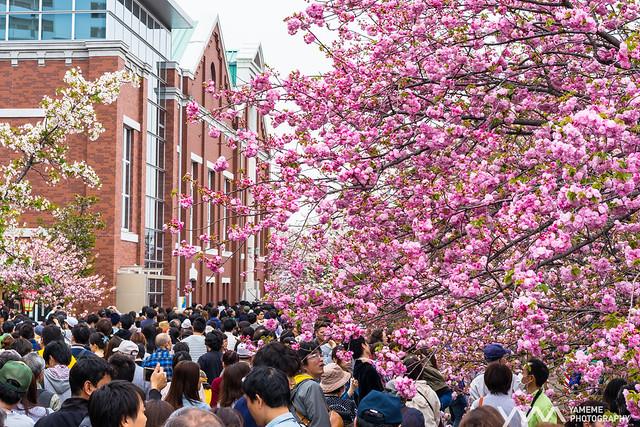 人山人海 A sea of people / Osaka, Japan