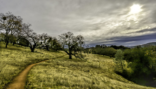california statepark trees mountains nature clouds landscape vista oaktree morganhill henrycoe henrycoestatepark nikond7100 punahou77