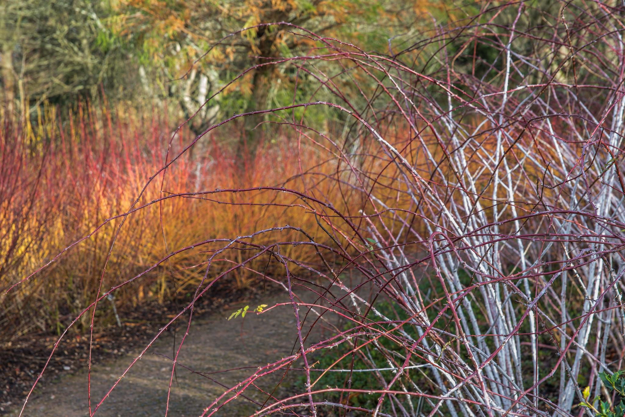 winter-stems (1 of 1)-4