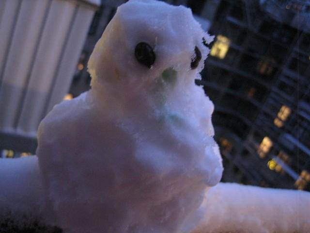 Snefugl