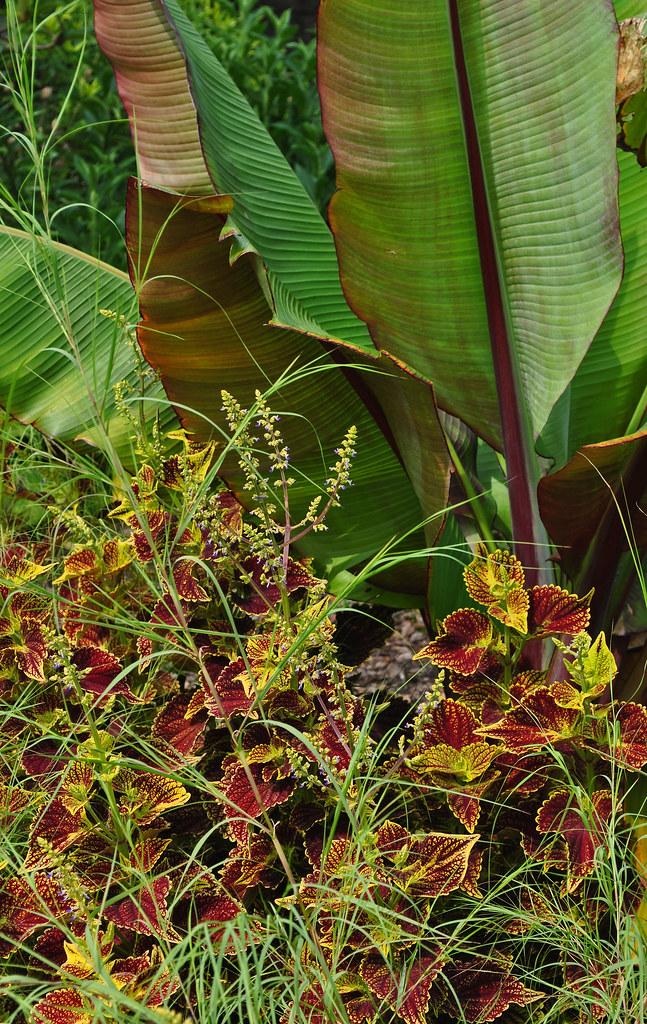 Sensory Garden (3)