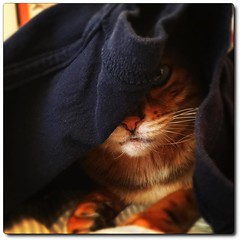 Mochica likes to hide under my clothes as I dress and try to leave the house.