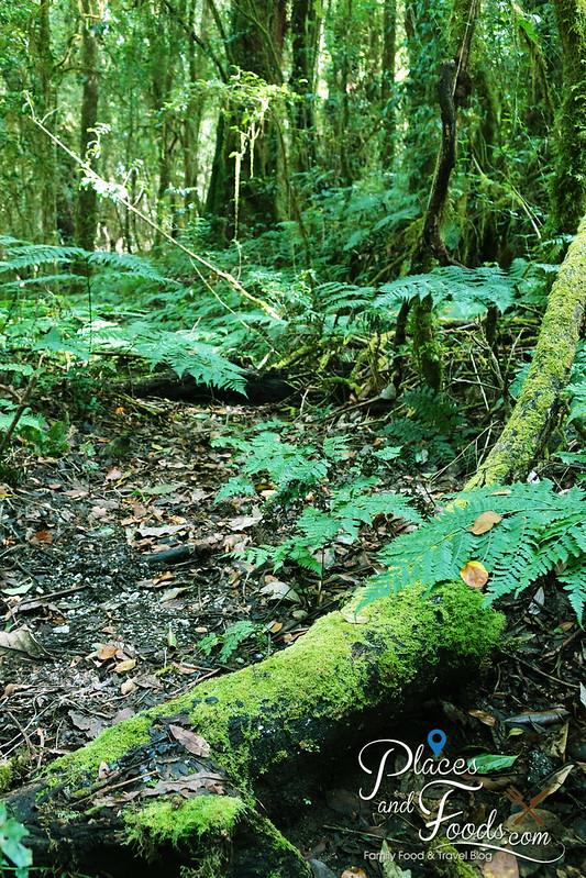 doi inthanon ang ka nature trail tree and moss