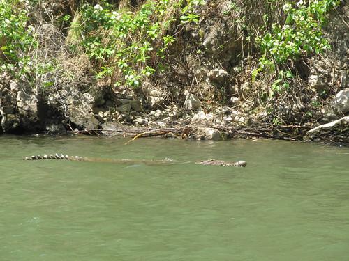 Cañon del Sumidero: crocodile à babord!