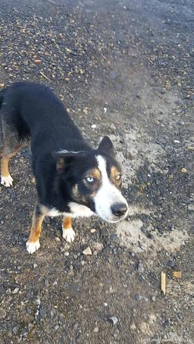 Tue, Mar 8th, 2016 Found Male Dog - Curlew Monument (steel Horse), Ballinafad, Sligo