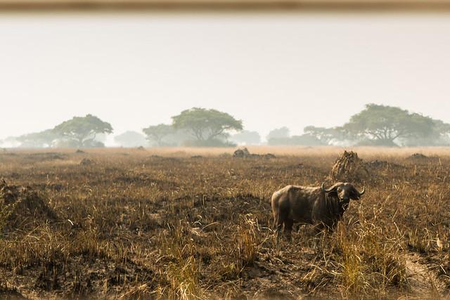 """on """"safari"""""""