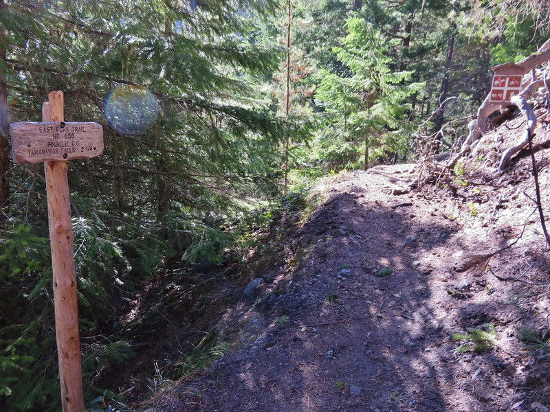 Elk Meadows Trail junction with the East Fork Trail
