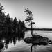 Silhouette at Kearney Lake
