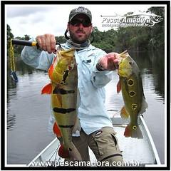 Enquanto a temporada não chega, o jeito é relembrar.  #pescaamadora #pescaesportiva #pesqueesolte #tucunare #tucunareaçu #amazon #amazonia #bassfishing #bass #bassmaniacs #peacocks #peacockbass #catchandrelease #baitcast #flyfishing #fly #pescador #pescar