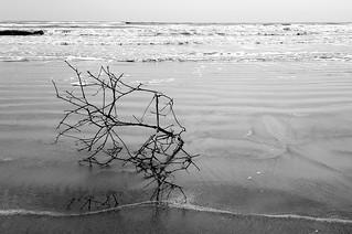 Wood on Sand (B&W)