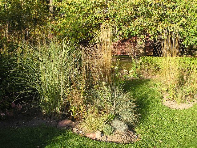 Grass Border in late September