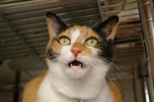 Flehmen-cat
