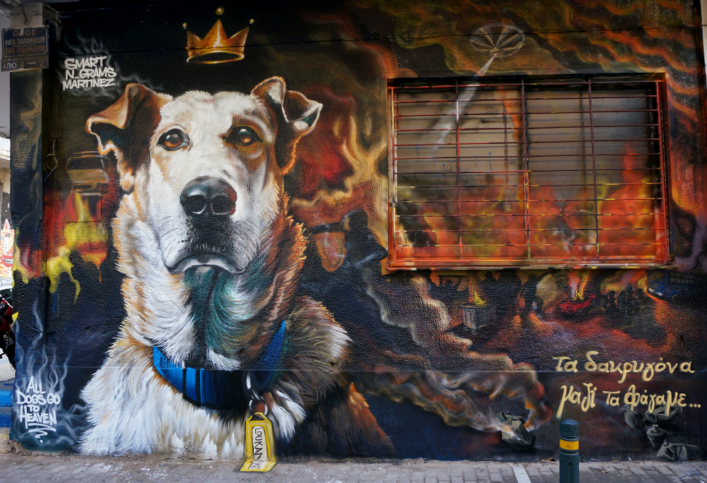 Portrait of Famous Street Dog