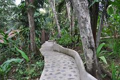 San Ignacio - Jungle Lodge Garden