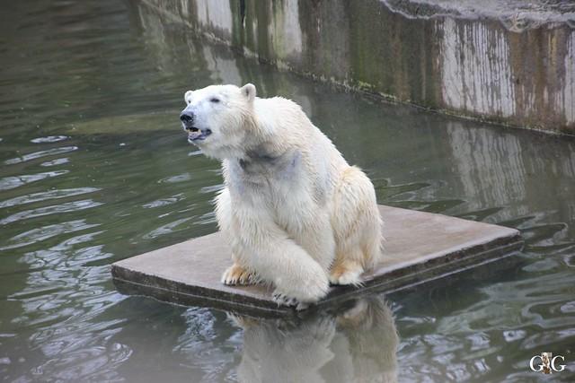 Besuch Tierpark Friedrichsfelde 14.02.201612