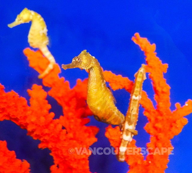 Ocean Rider Seahorse Farm-8