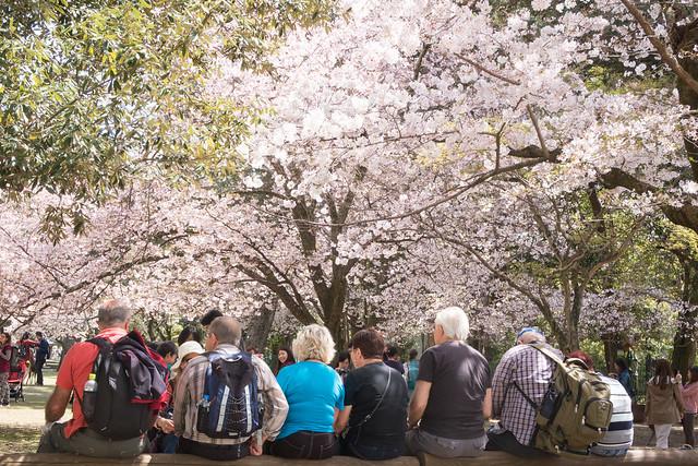 奈良公園の鹿と外国人観光客