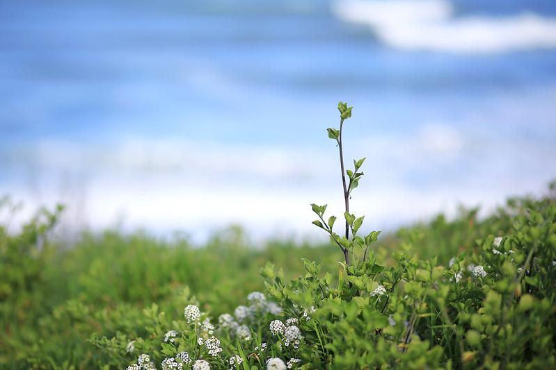 herbe-sur-la-mer