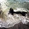Tronco em praia. #everydaylatinamerica #everydayriodejaneiro #everedaybrasil #nãovaitergolpe