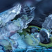 Ice art #17 by Lord V