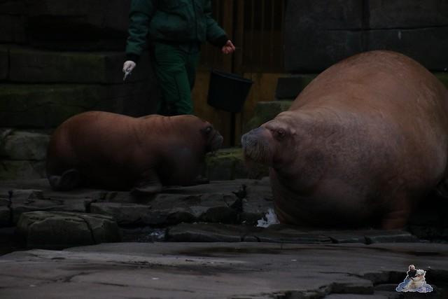 Tierpark Hagenbeck 02.01.2015   112