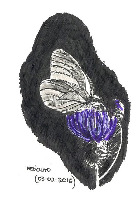Medioluto (Melanargia lachesis)