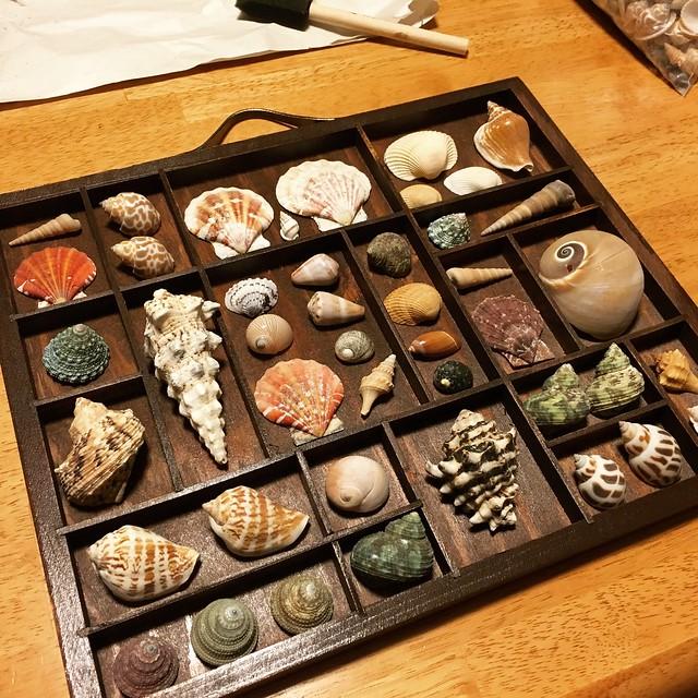 Shell curio tray
