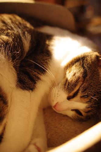 Happy nap time